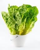 在白色隔绝的新鲜的蔬菜沙拉 图库摄影