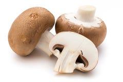 在白色隔绝的新鲜的蘑菇蘑菇 免版税库存图片