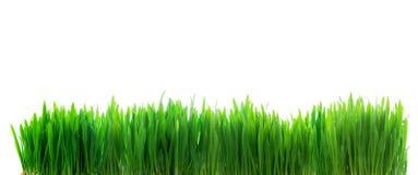 在白色隔绝的新鲜的绿草 库存照片