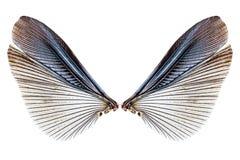 在白色隔绝的昆虫翼 免版税库存图片