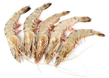 在白色隔绝的未加工的虾 免版税库存图片