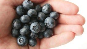在白色隔绝的极少数新近地摘的蓝莓 影视素材