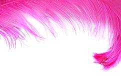 在白色隔绝的桃红色美丽的羽毛 免版税库存照片
