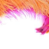 在白色隔绝的桃红色美丽的羽毛 库存图片