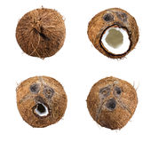 在白色隔绝的椰子集合的收藏 库存图片