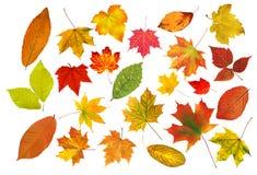 在白色隔绝的汇集美丽的五颜六色的秋叶 免版税库存图片