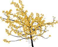 在白色隔绝的淡黄色小秋天树 图库摄影