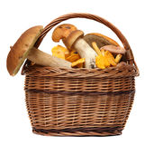 在白色隔绝的狂放的蘑菇篮子  免版税库存图片