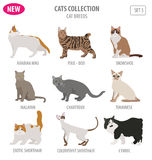 在白色隔绝的猫品种象集合平的样式 创造拥有inf 库存例证
