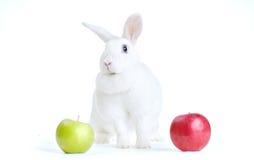 在白色隔绝的白色兔子看照相机用一个红色和绿色苹果 免版税库存照片