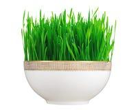 在白色隔绝的白色板材的新鲜的新的绿草 免版税库存图片