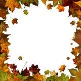 在白色隔绝的秋叶方形的框架边界 库存图片