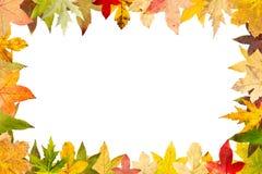 在白色隔绝的秋季槭树叶子季节性框架  免版税库存图片