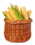 在白色隔绝的篮子的成熟玉米 免版税库存照片
