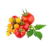 在白色隔绝的红色和黄色有机蕃茄 图库摄影