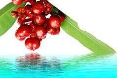在白色隔绝的红色狂放的果子 库存图片