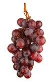 在白色隔绝的红葡萄 库存照片