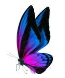 在白色隔绝的美丽的蝴蝶 库存照片