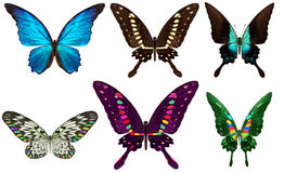 在白色隔绝的美丽的蝴蝶 免版税图库摄影