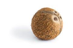 在白色隔绝的自然椰子 库存图片