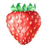 在白色隔绝的草莓水彩 库存照片