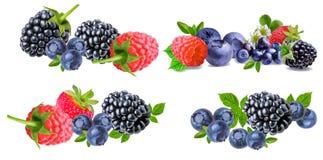 在白色隔绝的莓果的收藏 库存图片