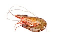 在白色隔绝的虾 免版税库存照片
