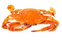 在白色隔绝的被蒸的海螃蟹 免版税图库摄影