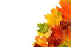 在白色隔绝的角落的秋叶 库存照片