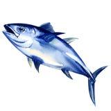 在白色隔绝的金枪鱼新鲜 向量例证