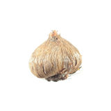 在白色隔绝的鸢属科属植物球茎 免版税图库摄影