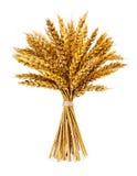在白色隔绝的麦子的小尖峰 图库摄影