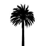 在白色隔绝的黑棕榈树剪影 库存照片
