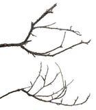 在白色隔绝的死的树枝 库存图片