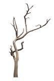 在白色隔绝的死的树 免版税库存照片