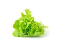 在白色隔绝的绿色莴苣叶子 库存图片
