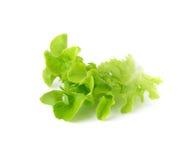 在白色隔绝的绿色莴苣叶子 免版税库存图片