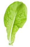 在白色隔绝的莴苣绿色叶子沙拉 免版税图库摄影