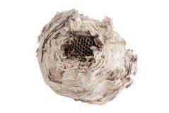 在白色隔绝的黄蜂巢 免版税图库摄影