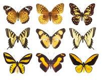 在白色隔绝的蝴蝶飞蛾的收藏 免版税库存照片