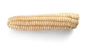 在白色隔绝的Choclo白色玉米国内食物 库存照片