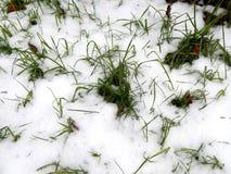在白色雪下的绿草 免版税库存图片