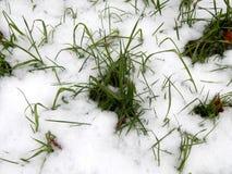 在白色雪下的绿草 库存照片