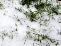 在白色雪下的绿草 库存图片