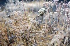 在白色雪下的花在冬天特写镜头,新西兰 图库摄影