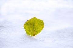 在白色雪中的一片绿色叶子 库存照片