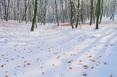 在白色雪的下落的秋叶在森林里 免版税库存照片