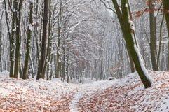 在白色雪的下落的秋叶在森林里 库存图片
