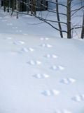 在白色雪的动物轨道 免版税库存照片