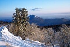 在白色雪的树 免版税库存照片